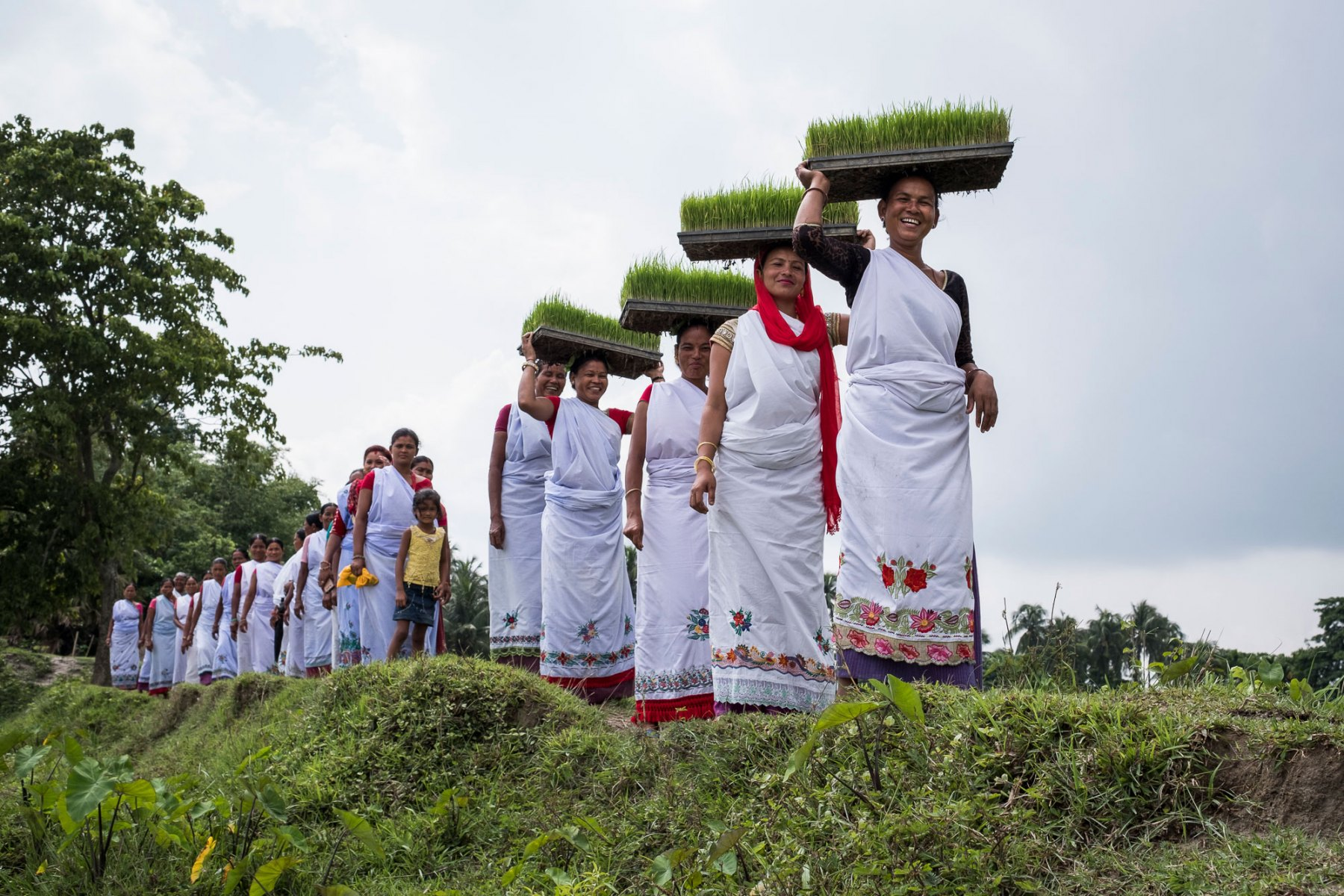 Members of the Ratu Rani Women's Agriculture Collective in Bhaluwa village walk out to a field where their group leader demonstrates how they have learnt to use a rice-transplanting machine. The group has 65 women farmers who are all from the Indigenous (Adavasi) Choudary group who traditionally are very poor and socially marginalized. The group is just one of many that are part of the ACIAR conservation agriculture project spanning the Eastern Gangetic Plains of Nepal, India and Bangladesh. The project aims to develop more intensive, sustainable timely planting of the main cereal crops – rice, maize and wheat – increasing yield and allowing for a third crop such as mung beans. Because of increasing rates of male migration from poor farming households, usually to work in the cities, women have emerged as the key producers, performing a wide range of tasks related to planning, cropping, managing, processing and marketing. This project is contributing to developing the potential of one of Asia's great future food bowls the Eastern Gangetic Plains.