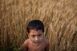 A boy stands amongst the wheat crop, Bangladesh (Photo: ACIAR)