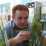 David Gale in the lab at IRRI emasculating flowers
